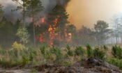 United States Partners with Indonesia to Address Forest Fires and Haze (Wikipedia CC)