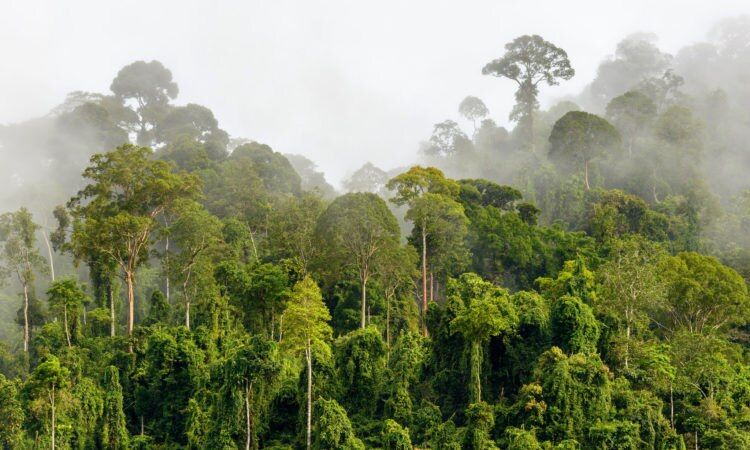 AS, Indonesia, TNC, dan WWF-I Umumkan Hibah Baru Senilai 3,3 Juta Dolar AS untuk Melindungi Hutan di Kalimantan
