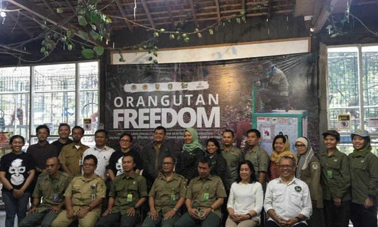 Indonesia dan Amerika Serikat Rayakan Pelepasliaran Orangutan yang Ke-100 (State Dept. / USAID)